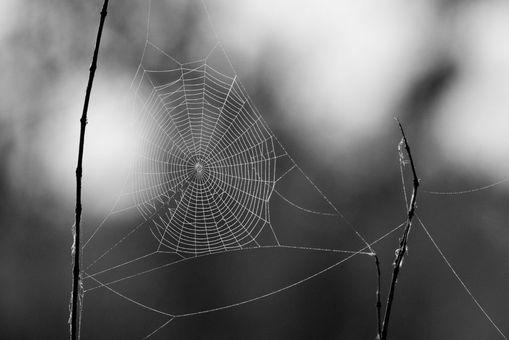 A spider's web depicting how humans are tuned for relationships - Boyd Varty