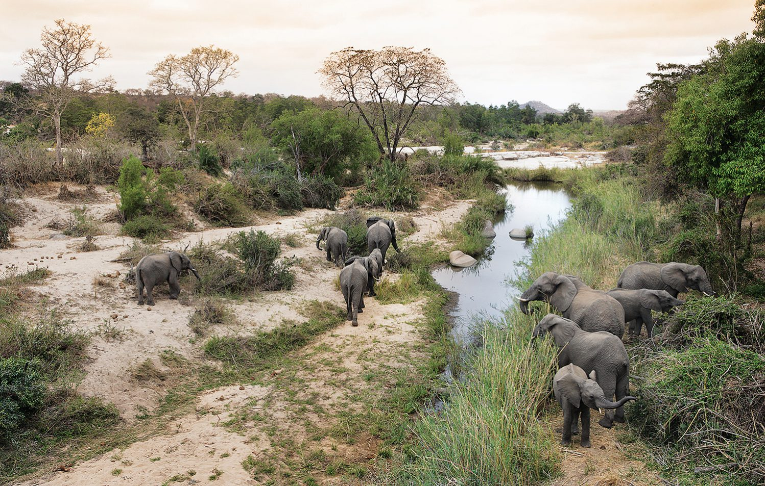 Londolozi Learning Journey