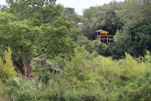 Londolozi Learning Journey Tree Camp