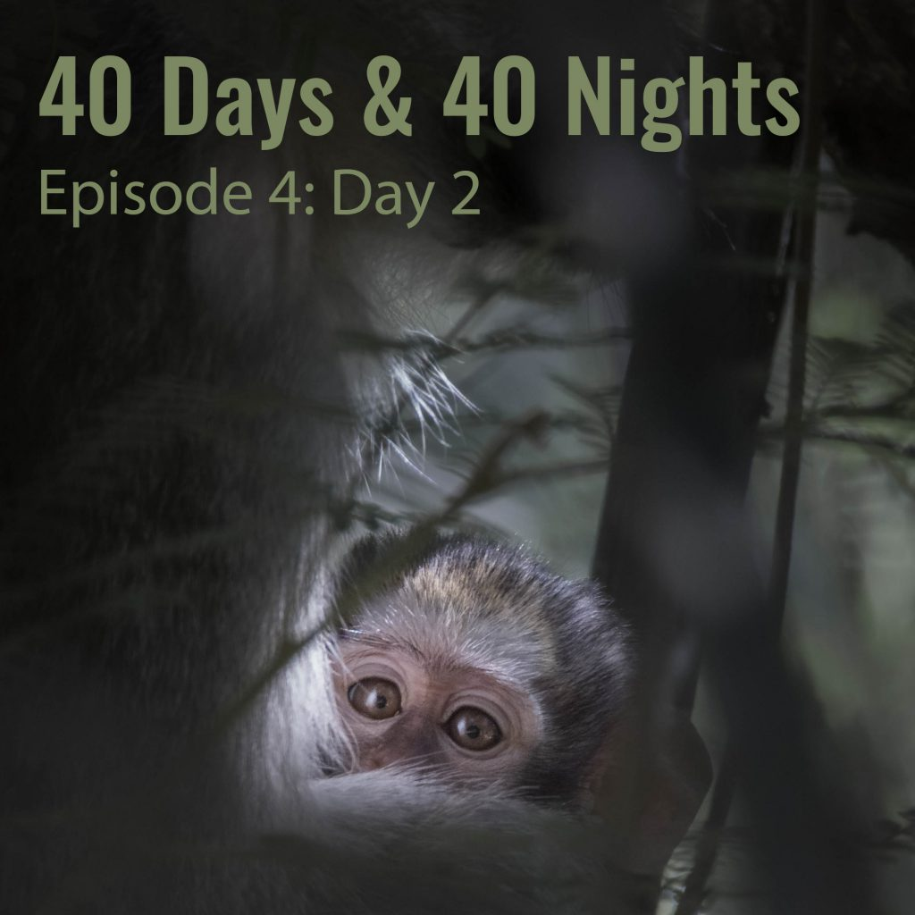 Day-2 40 Days and 40 Nights