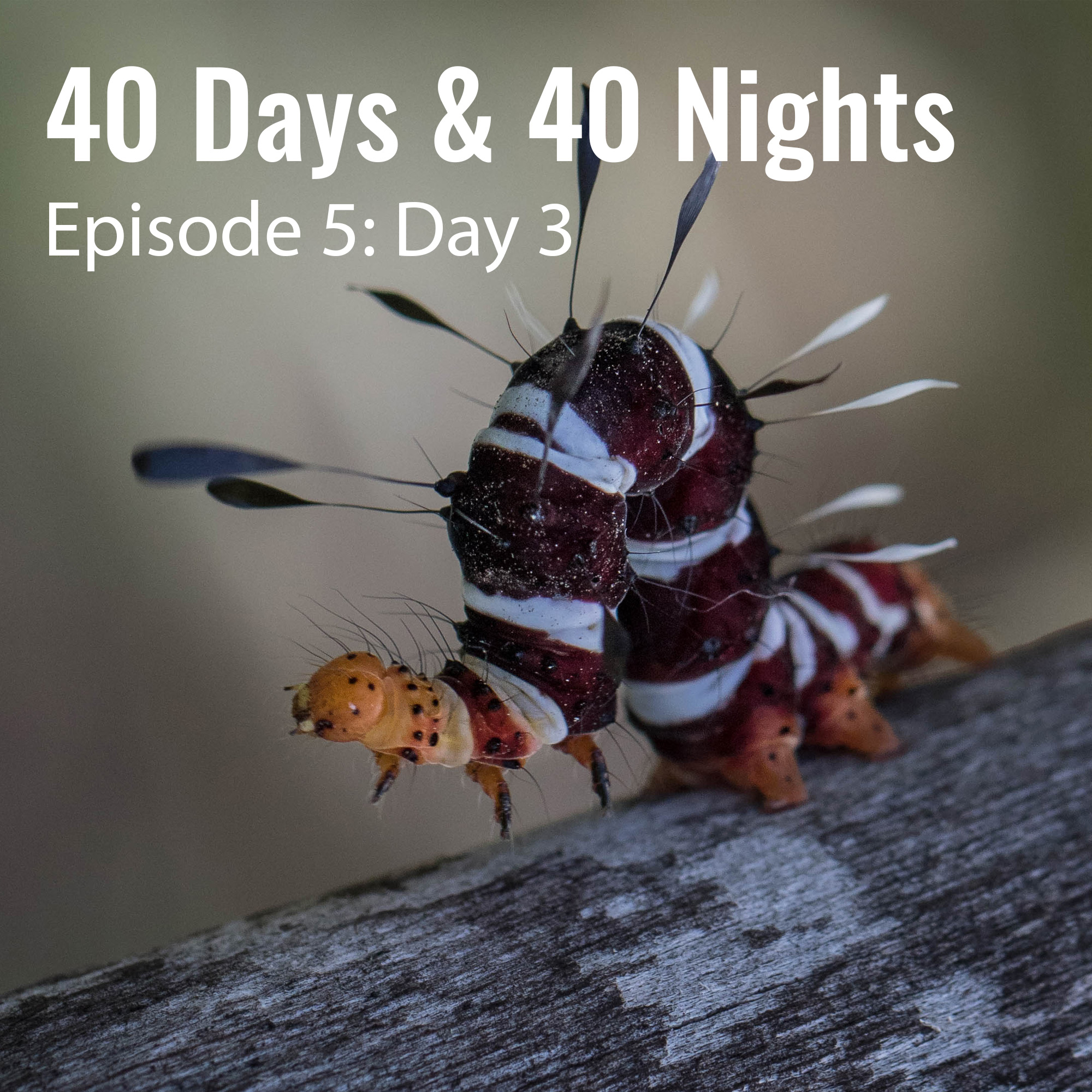 5-Day-3-40 Days and 40 Nights