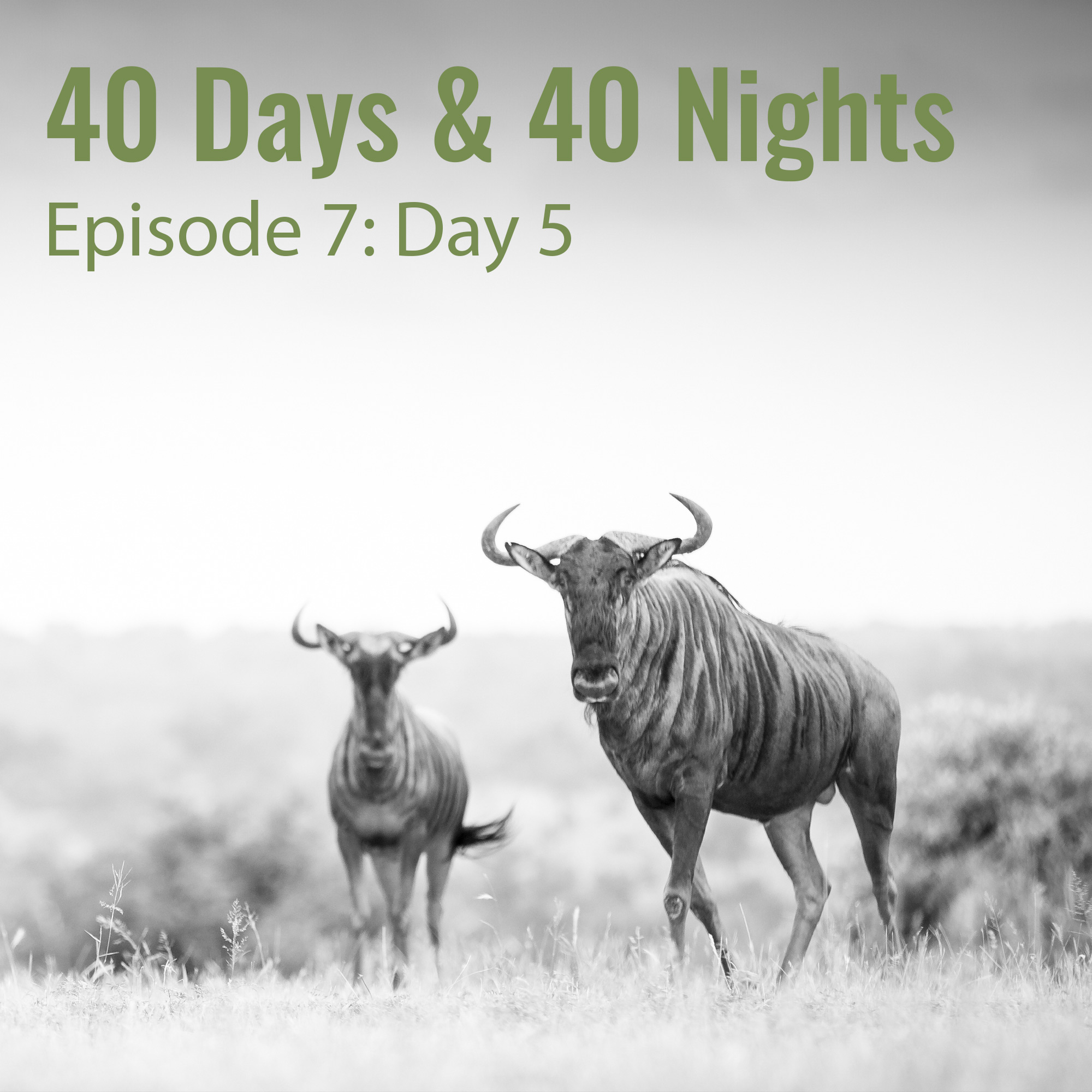 7-Day-5-40 Days and 40 Nights