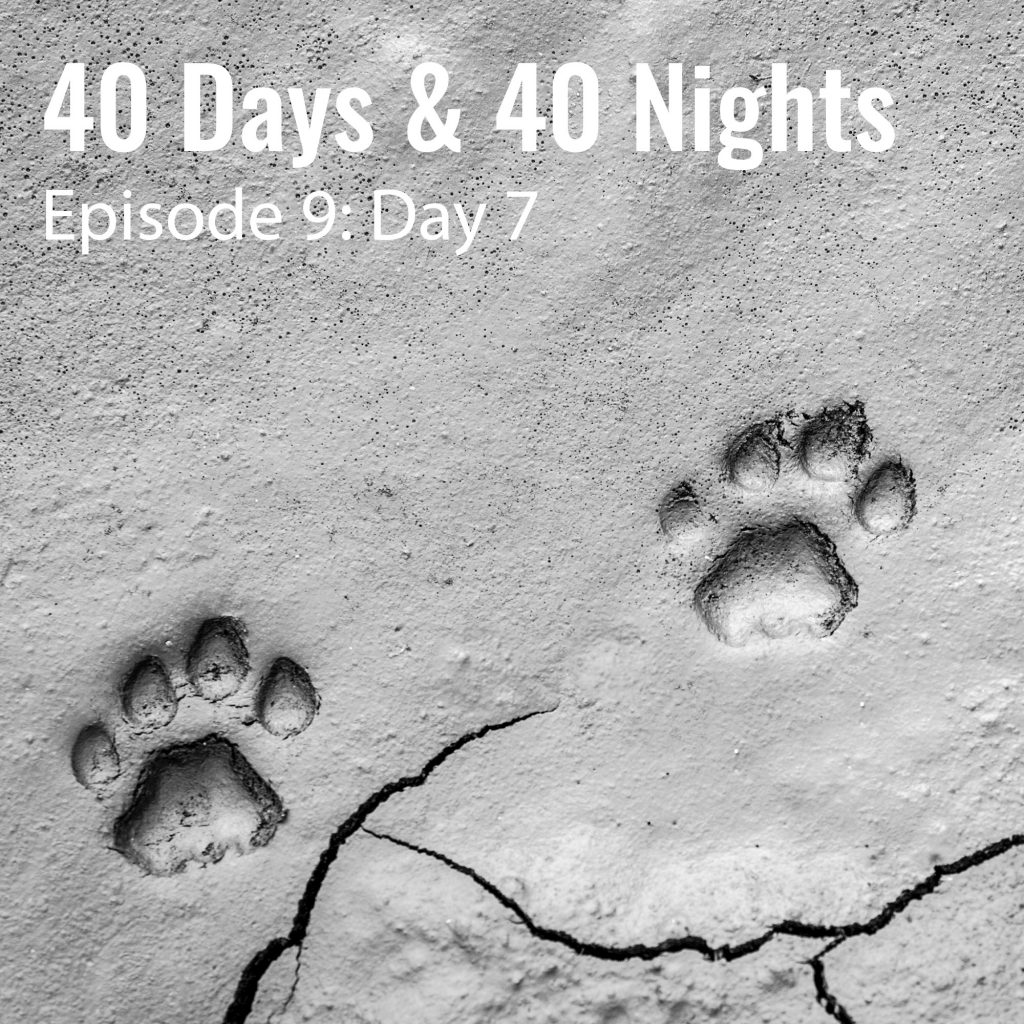 9-Day-7-40 days and 40 nights