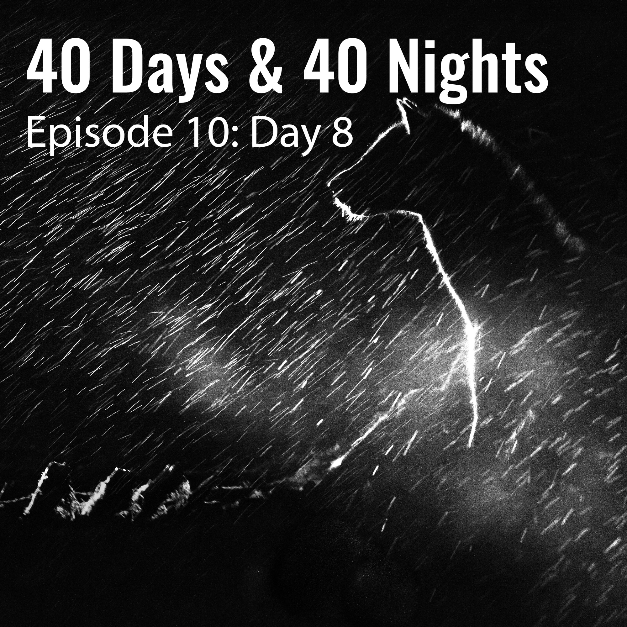 Day-8-40-days and 40 nights