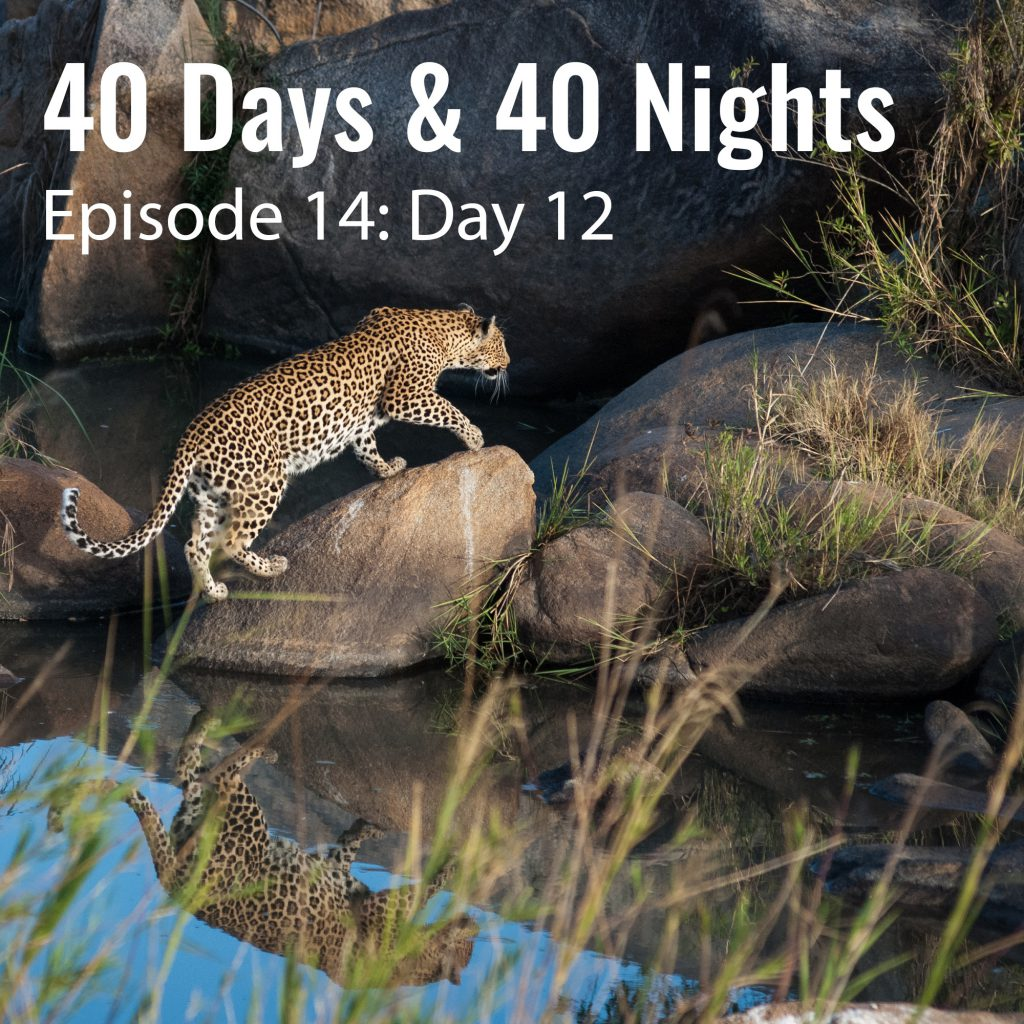 Day-12-40-days and 40 nights