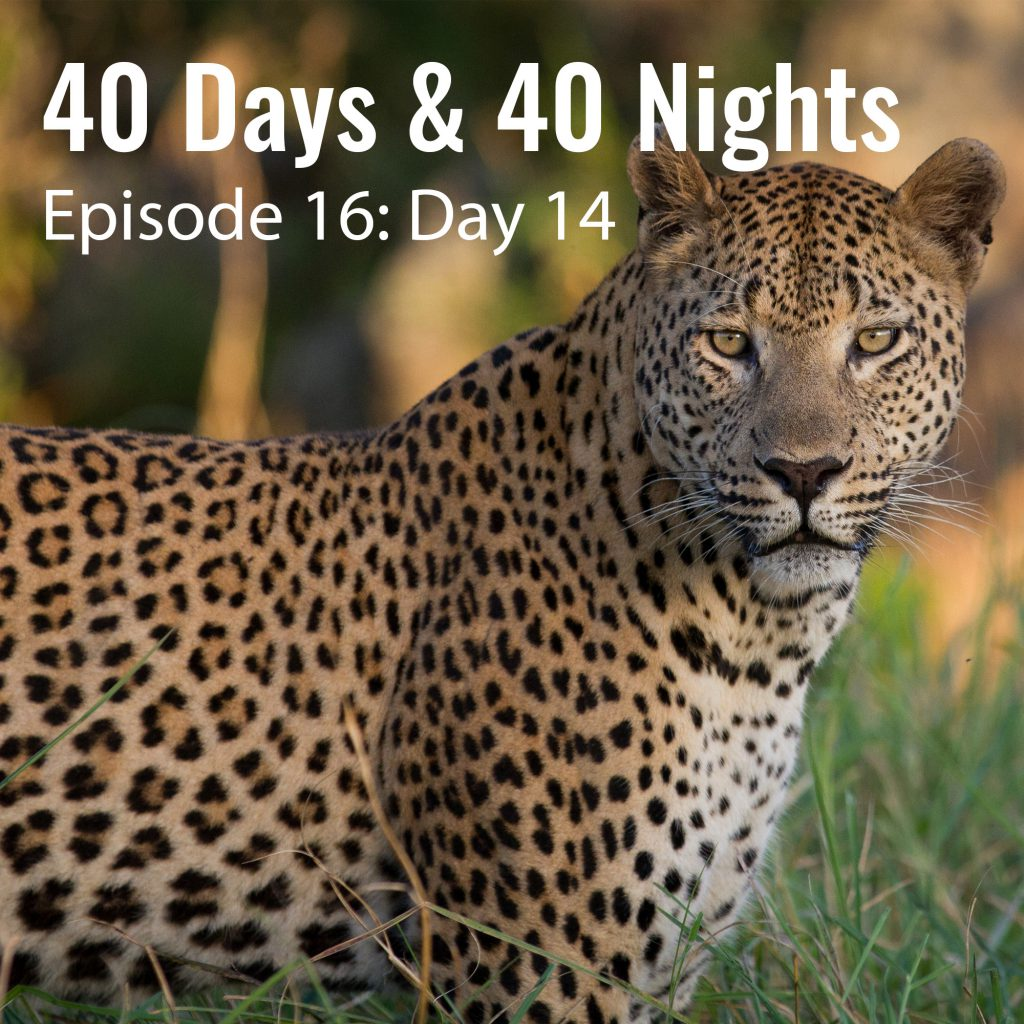 Day-14-40 Days and 40 Nights