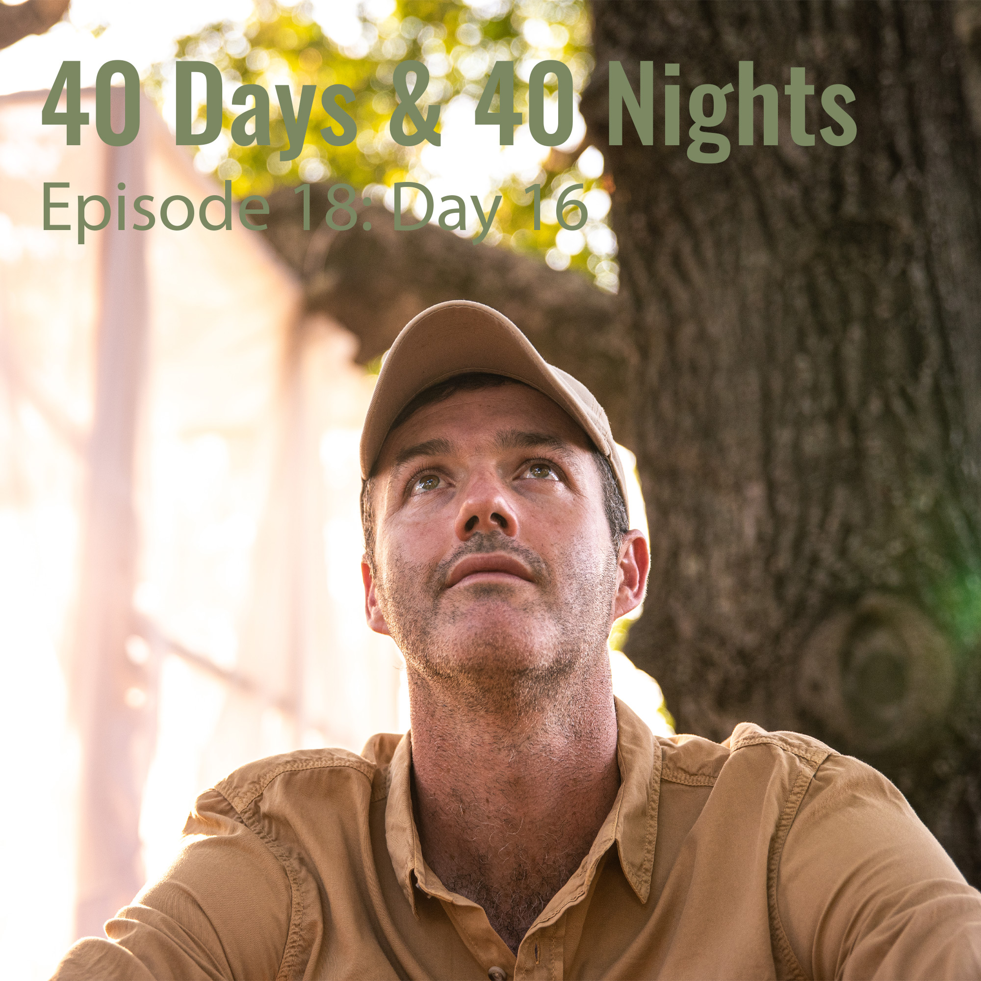 Day-16 40 Days and 40 Nights