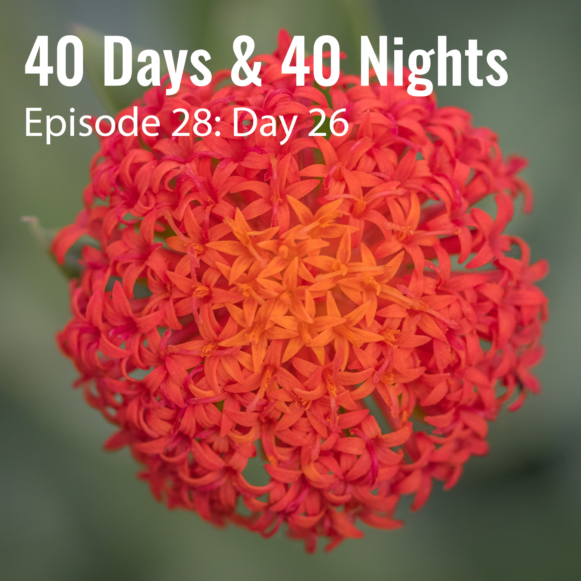 Day 26 40 Days and 40 Nights