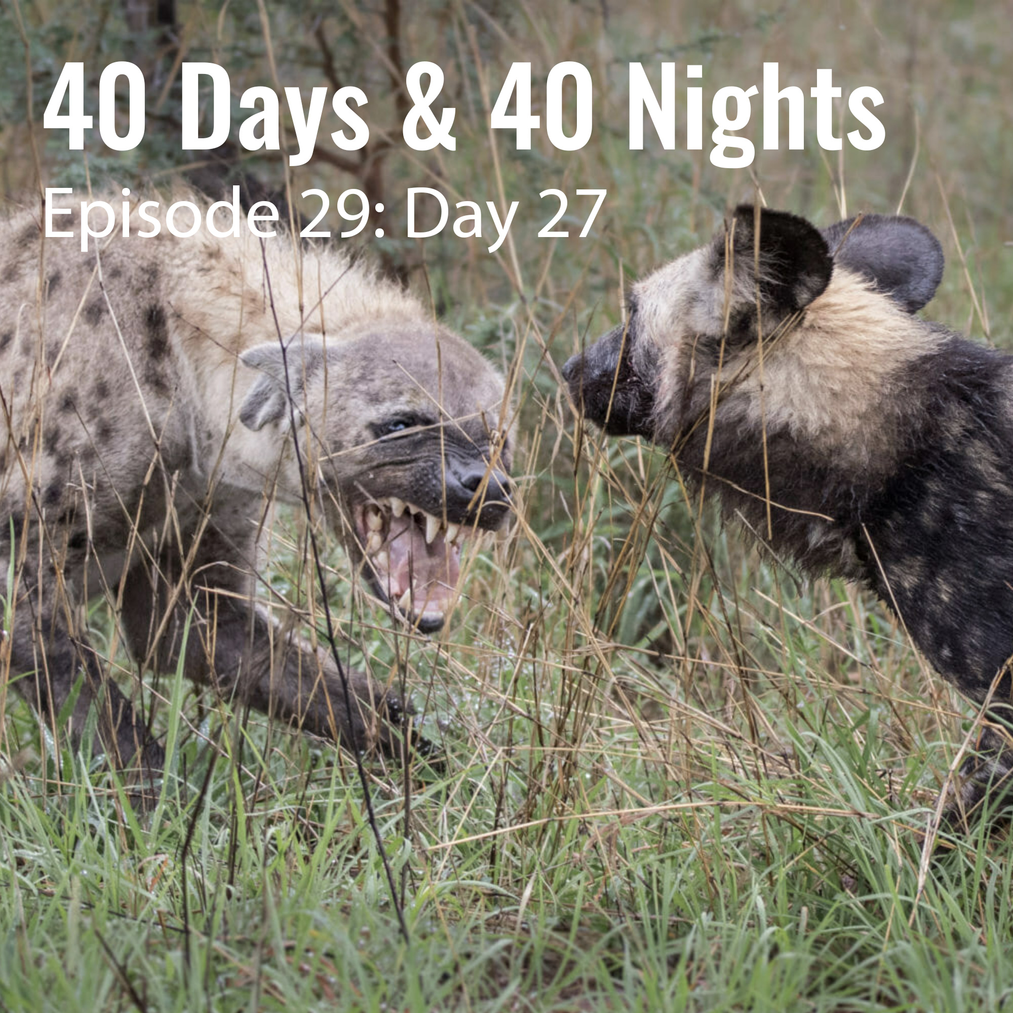 Day-27 40 Days and 40 Nights Boyd Varty