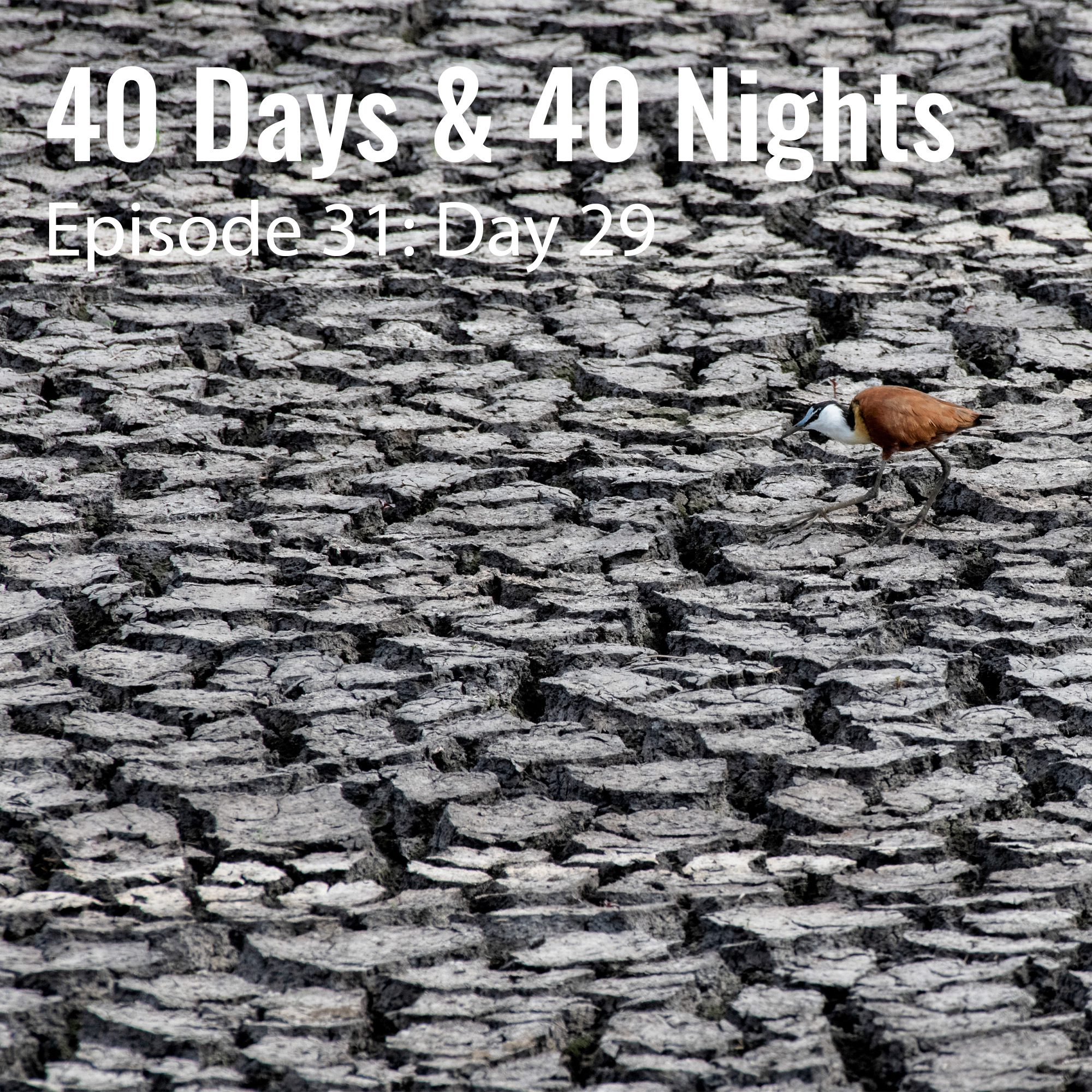 Day-29 40 days and 40 nights Boyd Varty