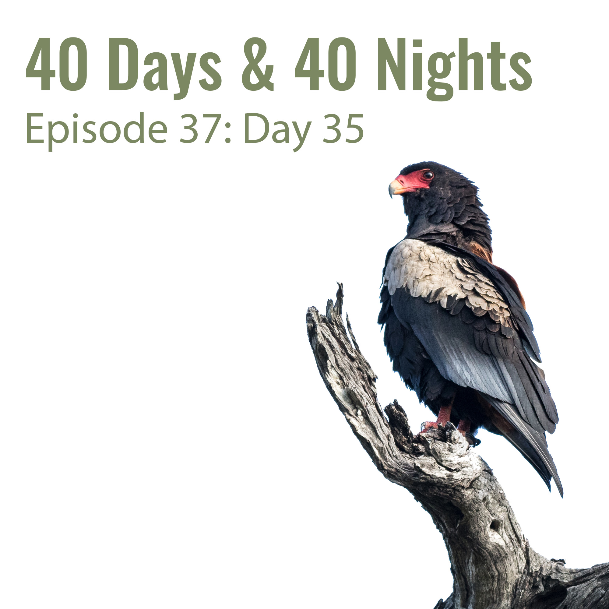 Day-35 40 Days and 40 nights Boyd Varty