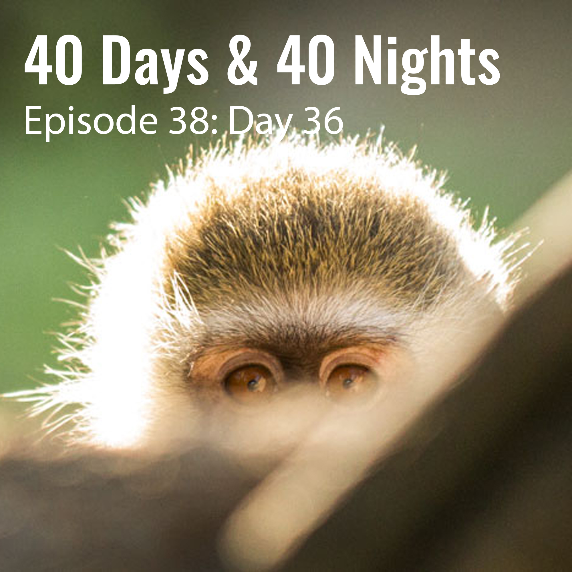 Day-36 40 Days and 40 Nights boyd Varty