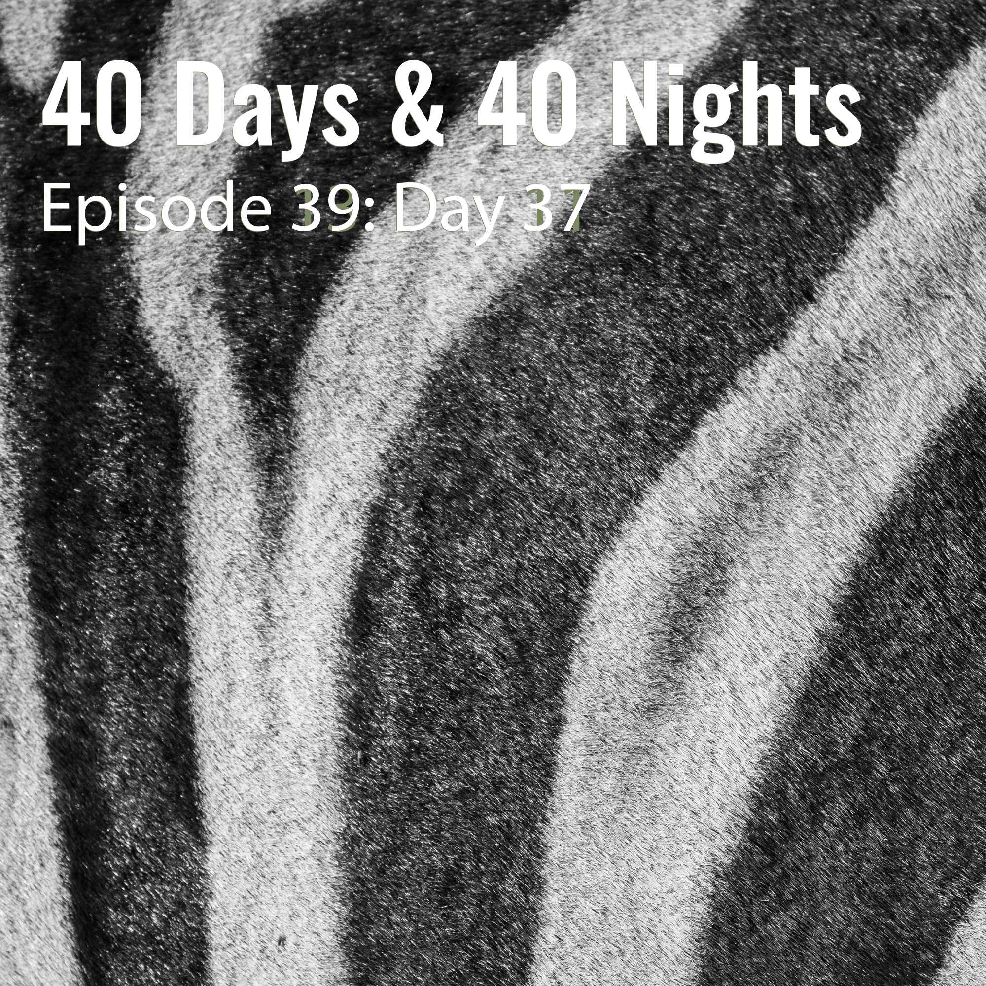 Day-37 40 Days and 40 Nights Boyd Varty
